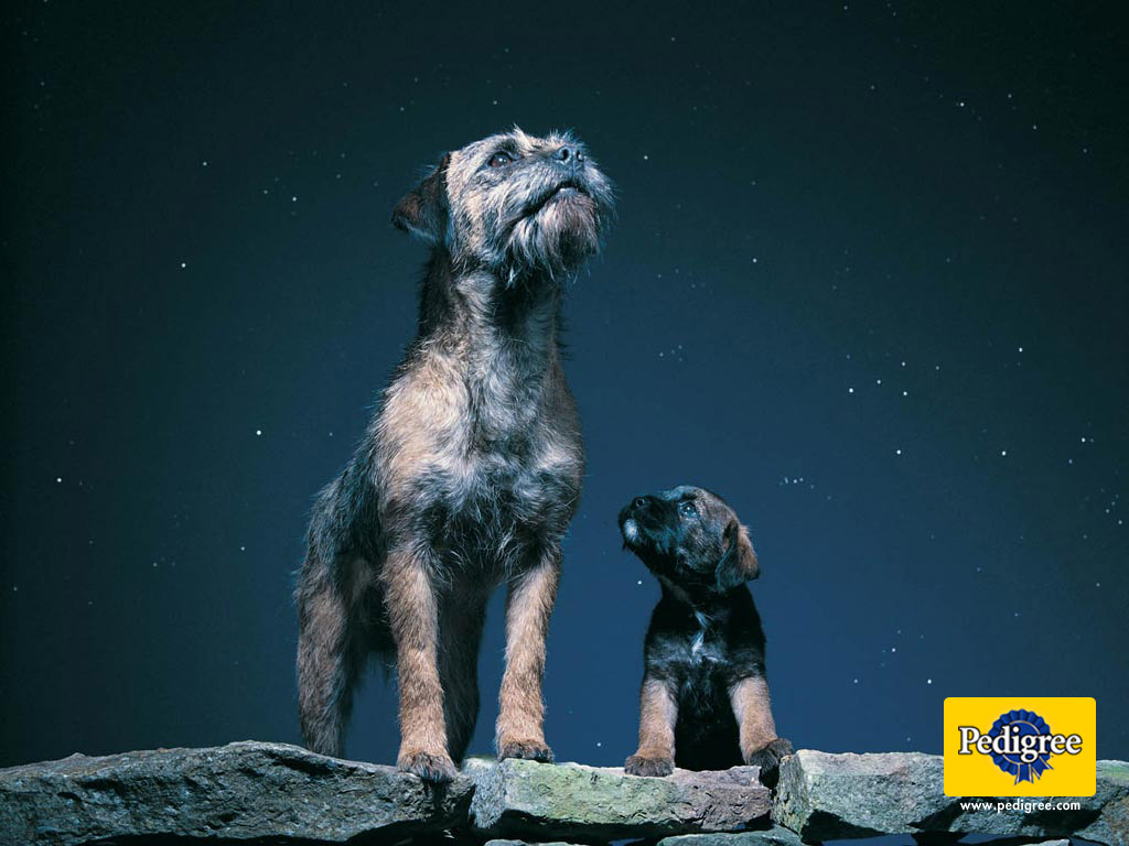 6 dog and puppy pedigree wallpapers