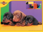 browndachsunds02_1024x768
