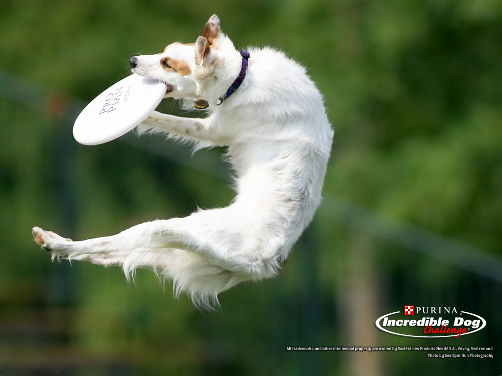 trained dogs pics wallpapers gallery