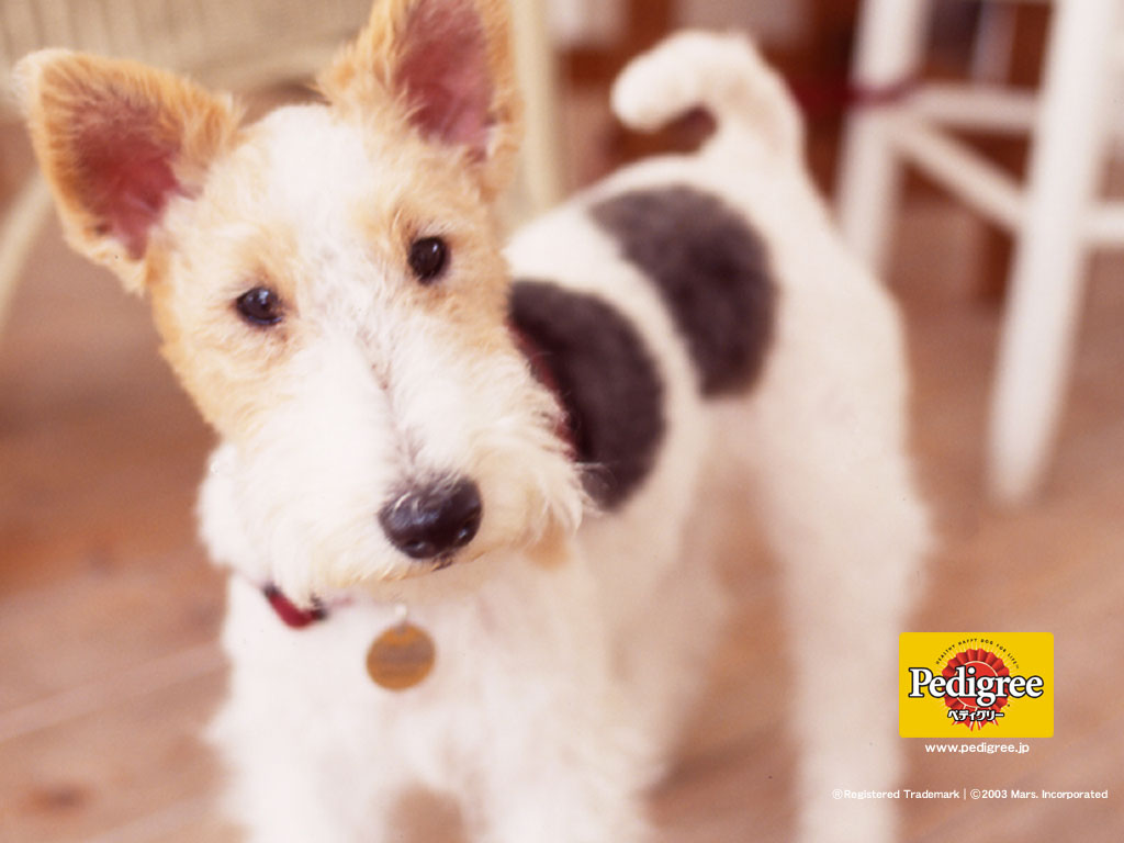 Pedigree Dog Food For Labrador Puppies