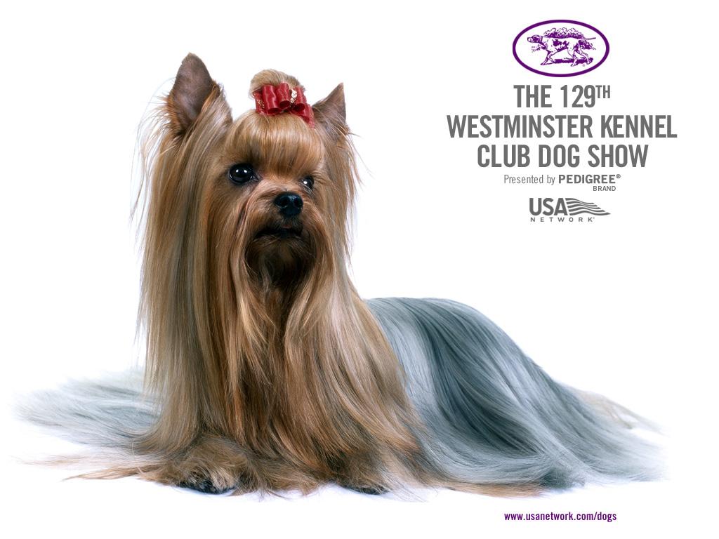 9 Westminster Kennel Dog Show Wallpapers Mutt News