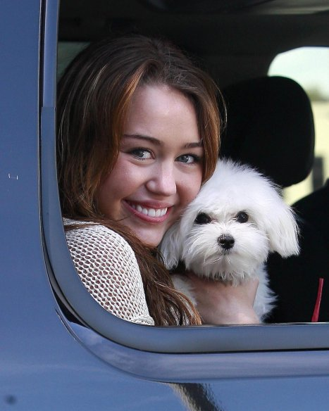 56432_celebutopia-miley_cyrus_with_her_dog_arriving_at_the_walt_disney_studios_in_burbank-04_122_575lo