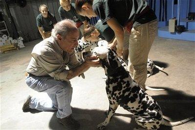 Pets 101 Dalmatians