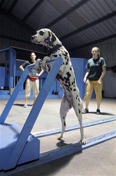 Lifestyles 101 Dalmatians
