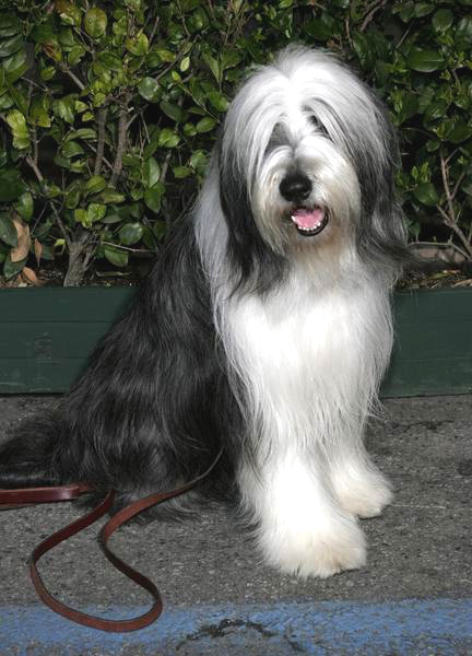 Coal the Dog at the Shaggy Dog World Premiere