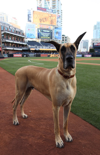 Dog Training Tv Shows