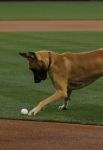Marmaduke Padres Game (22)