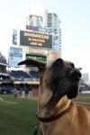 Marmaduke Padres Game (7)